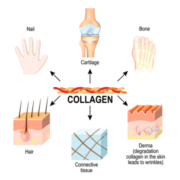 Collagen and the Supplement Routine